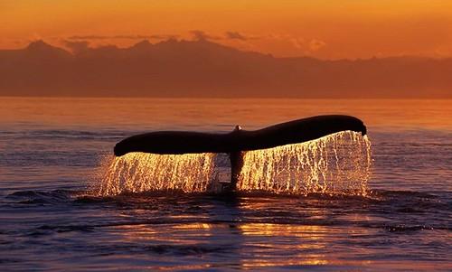Ballenas Canada