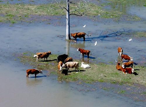 mississippi river flooding 2008 - natchez, ms/vidalia, la area