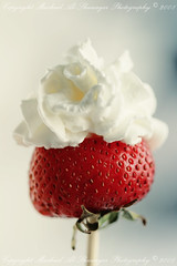 Strawberry Rose (Mashael Al-Shuwayer) Tags: food rose digital canon eos strawberry 400d mashael alshuwayer