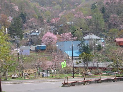 本町桜盛り