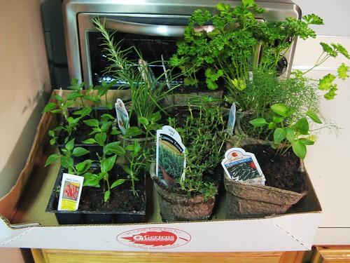 gertens_seedlings