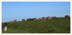 Mon en el salvaje Oeste (chausinho) Tags: naturaleza caballos senderismo pedras quedada barbanza mamoas tecendoredes kddtecendoredes12