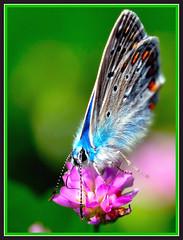 far456 (roberto.r) Tags: flickr estrellas soe blueribbonwinner abigfave impressedbeauty aplusphoto ysplix ahqmacro beautifulmonsters