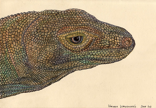 goana / monitor lizard / varanus komodoensis (colored)