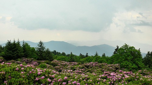 View from Roan Mountain Gardens