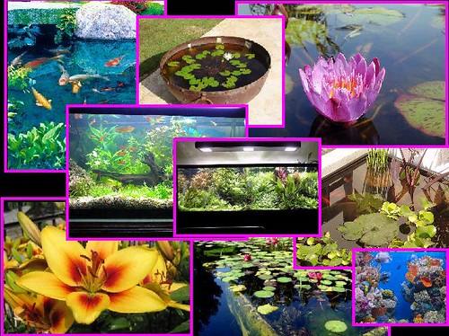 Pagina dedicada a todo tipo de plantas acuaticas