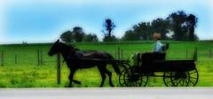 Separate World (anadelmann) Tags: boy portrait horse usa canon landscape pennsylvania amish pa lancastercounty buggy landschaft pferd junge pictureperfect canonpowershot birdinhand wagen blueribbonwinner g9 f2549 platinumphoto impressedbeauty theunforgettablepictures amishcounty canonpowershotg9 anadelmann nxpl