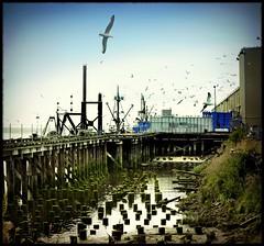 gulls at pier 2 (jody9) Tags: seagulls oregon pier dock ships columbiariver astoria boatyard holgaesque
