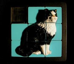 Pousse-pousse chat (martoulette) Tags: chat jeu poussepousse basique catnipaddicts