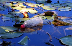 bottle on a lily pad (Leonard John Matthews) Tags: bottle pond lily pad australia bottledwater environment shame flytipping throwaway blemish fecklessness plastictrash trashbit mythoto