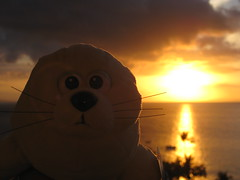 George (George the Seal) Tags: ocean trees sunset vacation cloud beach clouds hawaii view july maui palm 2008 westin 08