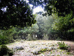 che caldo (FRANCO CERNIGLIA) Tags: light sun mountain snow cold alberi trekking evening quercus shine neve campo inverno montagna freddo ilex pasquetta supramonte suber urzulei lecci bargios wwwsardiniatouristguideit