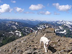 The one semi-good dog in lead and Joanna summiting - looking south