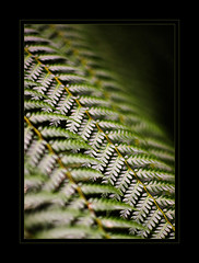 D.o.f. (AnyMotion) Tags: plants fern floral frankfurt 2008 rs palmengarten farn anymotion fineartphotos flickrelite overtheexcellence betterthangood theperfectphotographer