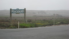 Pescadero Morning IMG_1328.JPG Photo