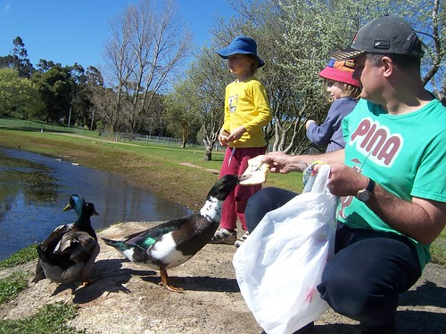 feeding the (giant) ducks_6683