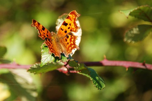 1 acre - October  Comma