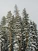 BM323 Beaver Creek (listentoreason) Tags: usa snow plant nature water america colorado unitedstates scenic places olympus co beavercreek conifer pinophyta coniferae score30 olympusc4040z c4040z pinopsida pinales