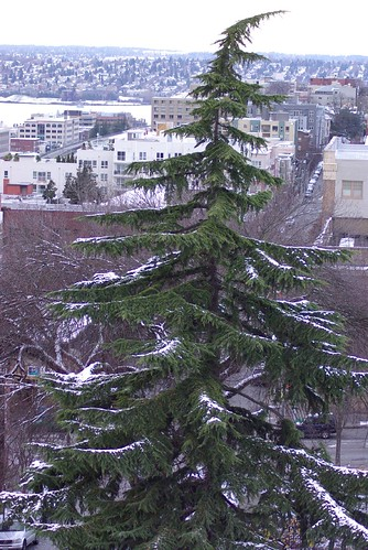 2008-12-14 Snow in Seattle Tree