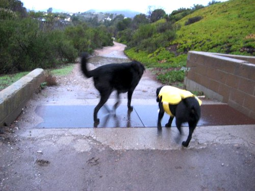 wet dogs