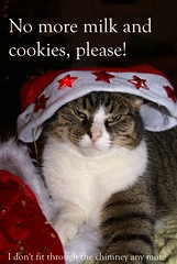 No More Milk and Cookies... (Hylda_H) Tags: santa christmas red food holland netherlands dutch feast cat weihnachten festive fur photography star stuffed feline flickr fotografie eating tabby humor nederland noel gifts presents santaclaus fatcat santahat atetoomuch nomore kerst thedayafter hangovers toofull cyper holidayfun hyldah fitdownthechimney hohohobeardandhatincorporatedintheoriginalo
