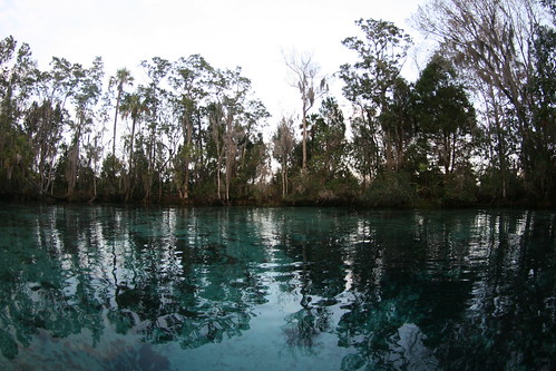 Crystal River in the winter