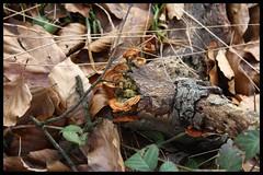 Mushrooms (Borja Iglesias) Tags: mushrooms foreground vegetacin setas saltodelnervin setasmmontedesantiago
