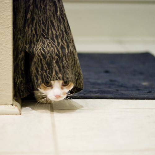 Peeking (by pricklypearbloom)