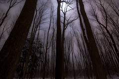 Midnight Forest (NaturesEssence) Tags: guelph arboretum tokina1224mm