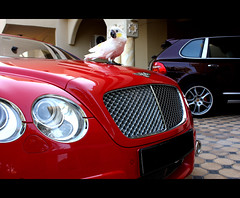-::- Umbrella,Wanna Drive! -::- (-::-Mr.AD-::- *Uae*) Tags: red pet bird cars home car umbrella parrot cockatoo bentley gt63