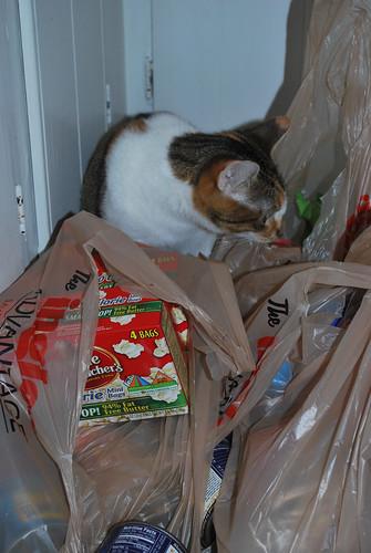 callie groceries 3