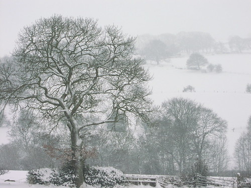 Tree, Sheps Hill, Totley