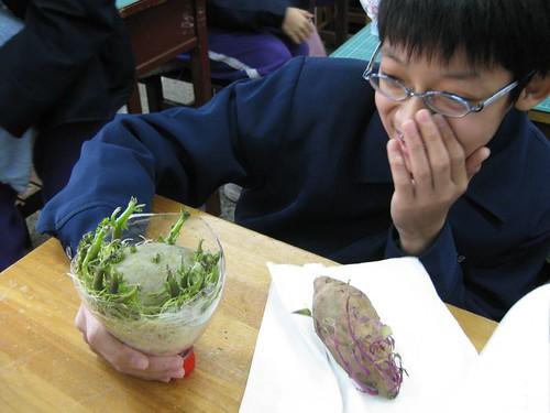 長得真是茂盛極了的馬鈴薯哪
