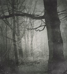 (sole) Tags: wood autumn trees winter blackandwhite bw art nature fairytale forest dark landscape photo europe dream surreal topf275 spooky topf150 topf250 obscure hanselandgretel intrestingness2 ftopf300