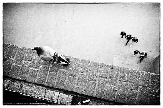 Pigeon & People