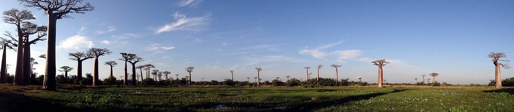 baobab08