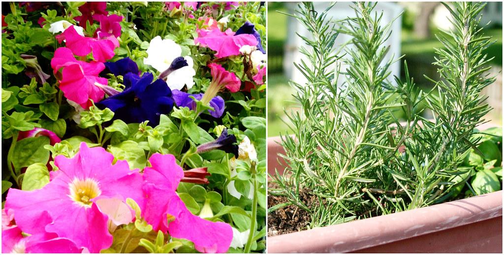 Petunia's and Rosemary