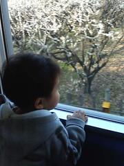 電車でおでかけ(この10分後に寝たけど)