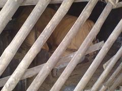Siddhar Ayya on Tiruvannamalai (Innerseeker) Tags: john gopal tiruvannamalai thiyaga ramanamaharishi siddhar annamalaiyar meditationplace