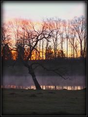 Lonely Dawn (remy fauxtog) Tags: tree fog sunrise dawn alabama helena