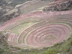 Moray terrasses