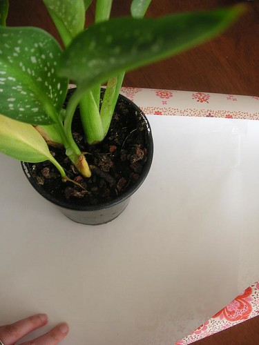 Potted plant wrapping