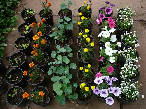 flowers-1150117