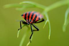 Bug (Alatak) Tags: cruzadas colourartaward platinumheartaward alatak