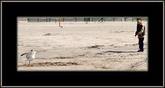cautiousness meeting  (08602) (Juergen Kurlvink) Tags: trip travel vacation people beach birds animals strand germany geotagged deutschland tiere sand meer europa europe mare tour child respect state gulls urlaub saxony meeting kinder menschen kind peoples northsea ausflug lower moewe childs 2008 nordsee allemagne federal ferien angst friesland bundesrepublik vogel reise moewen voegel mensch holyday brd precaution juergen niedersachsen vorsicht respekt frisia bundesland begegnung bensersiel moeven 0fav trashbit kurlvink cautiousness kurli1 ilovemypics 0allok natpeopfre