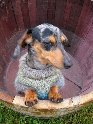 Lexi wondering why she is in a wine barrel