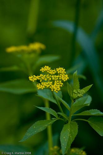 Wild Flower (3 of 6)