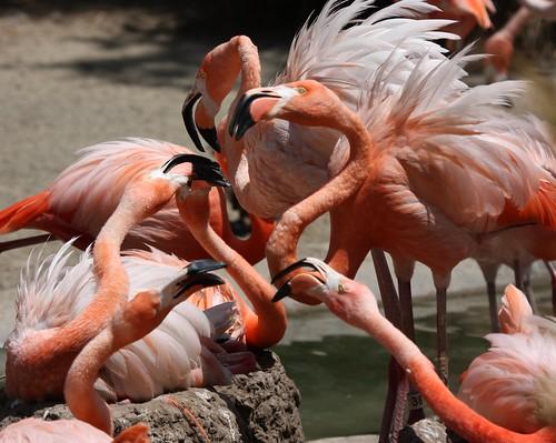 Flamingo Gossip – Nathan Rupert
