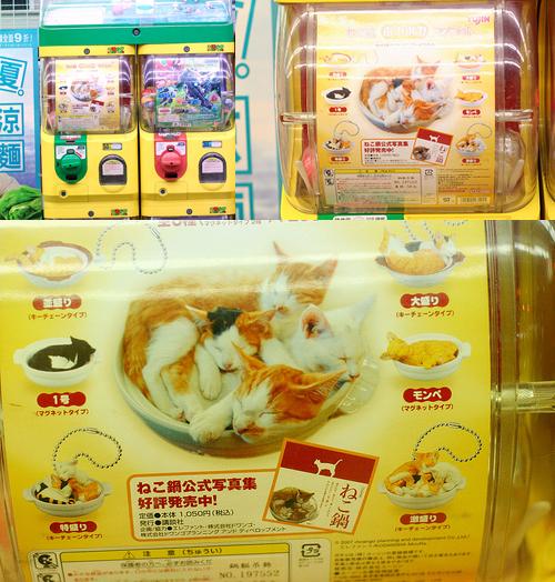 20080623愛貓鍋-01