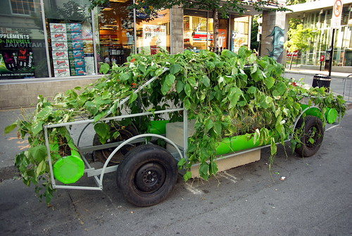La voiture verte